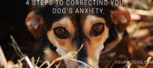 Correcting Dog Separation Anxiety