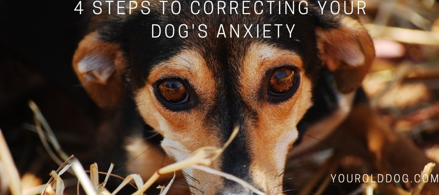 Correcting Dog Separation Anxiety