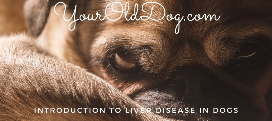 introduction to liver disease in dogs