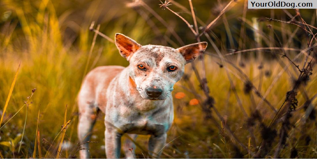 Art of Canine Massage