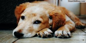Arthritis Affecting Dogs