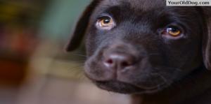 Dog's Cataracts