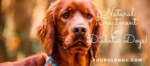 TREATING DIABETIC DOGS NATURALLY