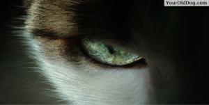 Your Dog's Eyes