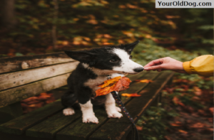Skin solutions for dog