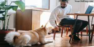 Transitioning Your Dog From Adult To Senior