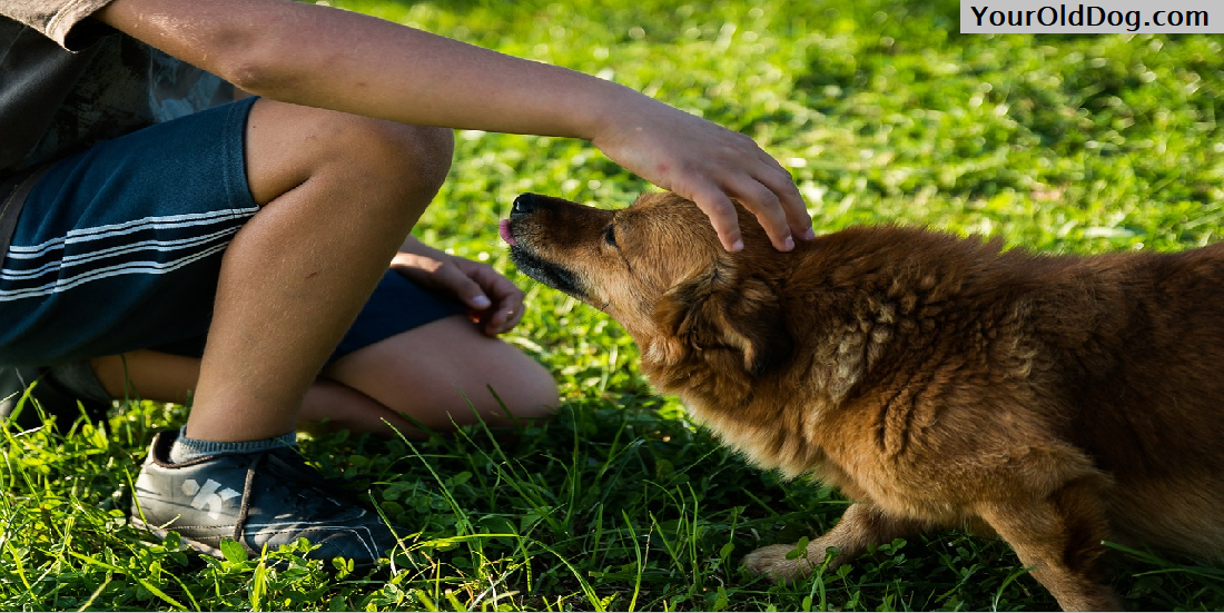 Getting Older with Your Dog