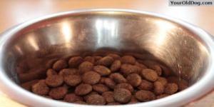 Pet Food Buzzwords
