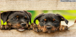 Amazing Facts about dog