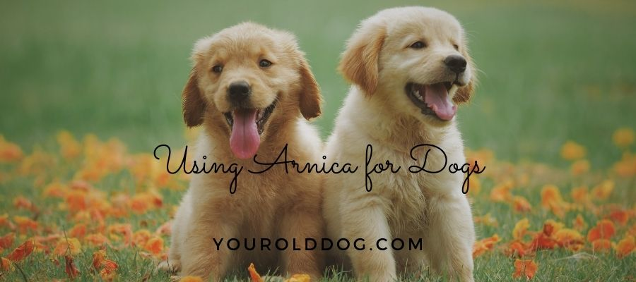 using arnica for dogs