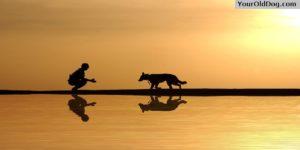 Behaviour for dogs
