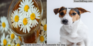Chamomile for dogs
