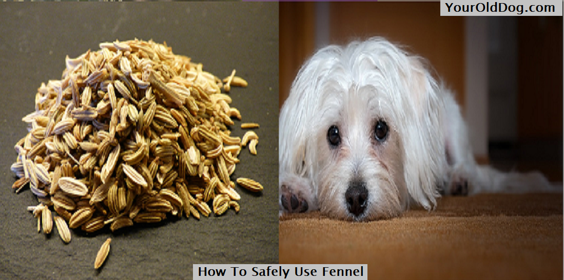 How To Safely Use Fennel