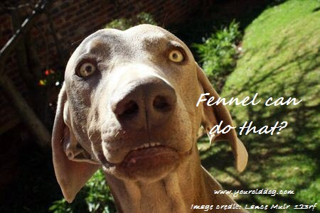learn to use fennel for your dog
