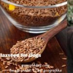 Flaxseed for Dogs and How to Use It Correctly