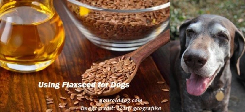 Health Benefits Of Flaxseed For Dogs And How To Use Safely