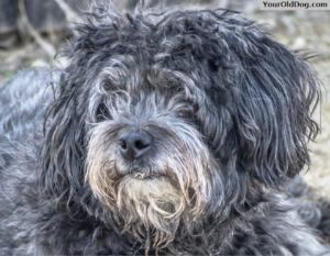 Is Feeding A Raw Diet Safe For Older or Sick Dogs | Your Old Dog