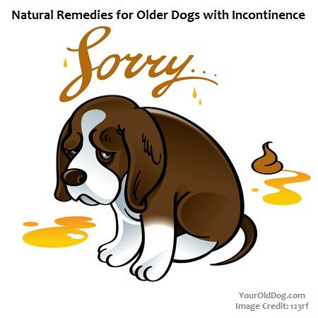Natural Remedies for Urinary Incontinence in Dogs