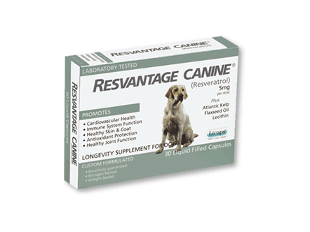 Resveratrol Canine Pain Tumor Cognitive Natural Supplements