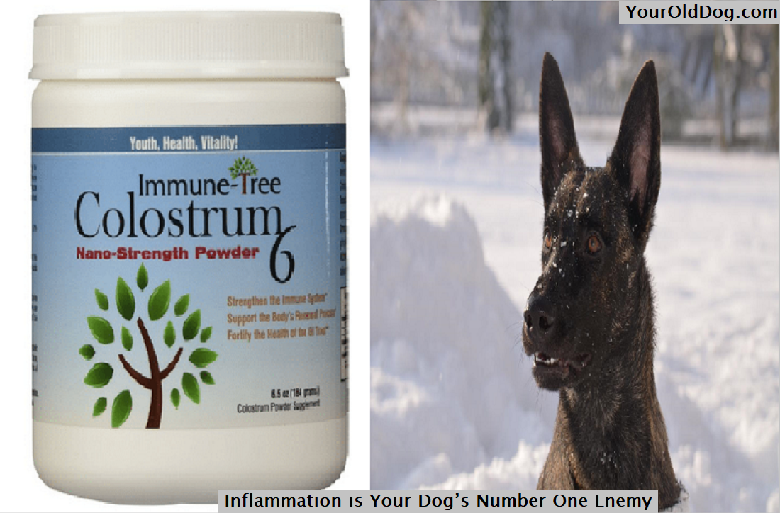 Inflammation for Dog