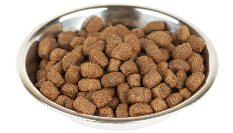 Recipe cookbook for sick dogs your old dog kibble especially hard on sick dogs forumfinder Image collections