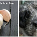 Garlic for Dogs and How To Safely Use It