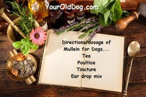 directions for using mullein for dogs