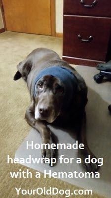 homemade head wrap for a dog with a hematoma