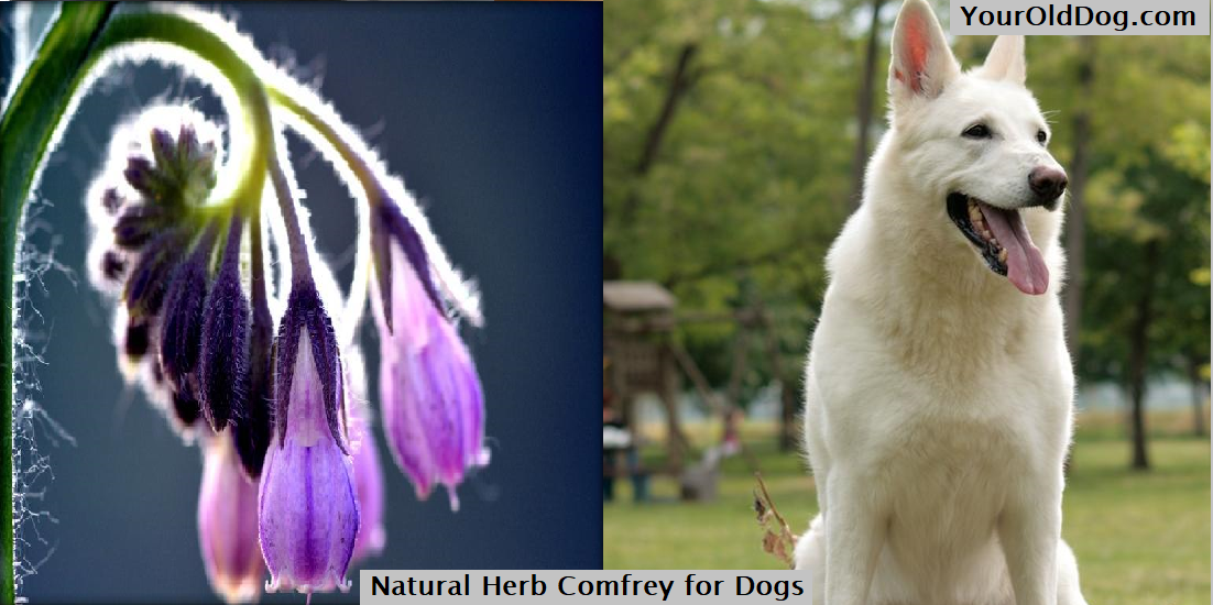 Comfrey for dog
