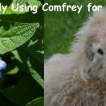Comfrey for Dogs and How to Safely Use It