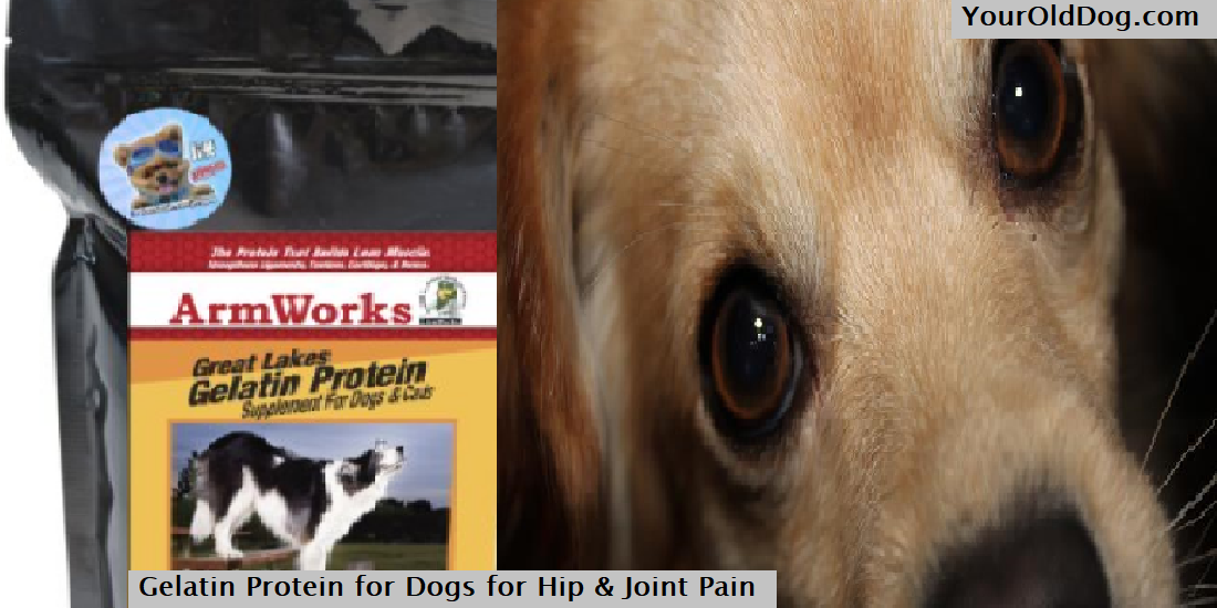 Gelatin Protein for dogs