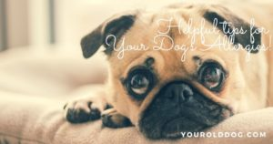 natual tips for dogs with allergies