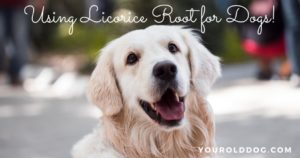 directions for using licorice root for dogs