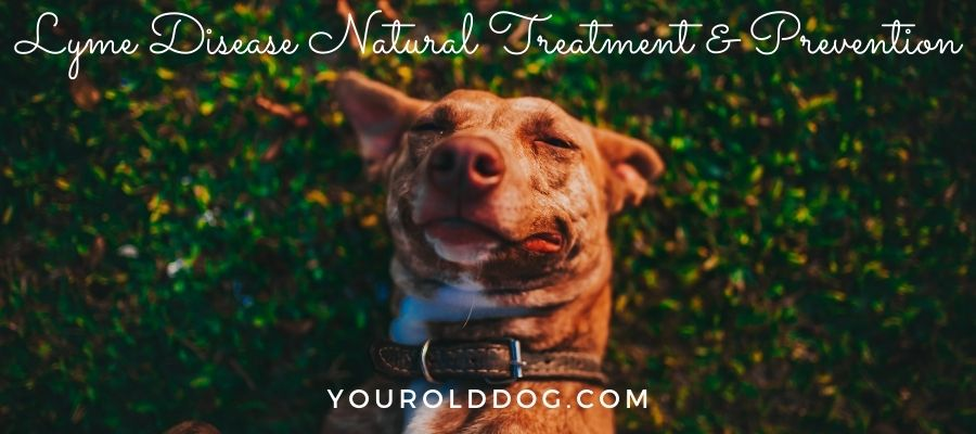 lyme disease natural cure dogs