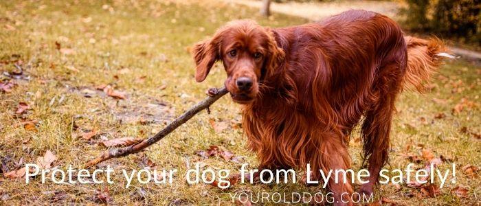 dog natural lyme prevention