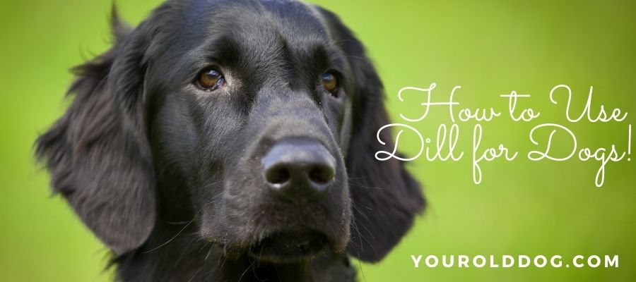 how to use dill weed for dogs