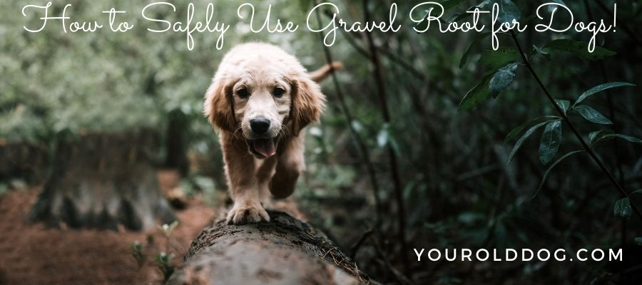 how to use gravel root for dogs