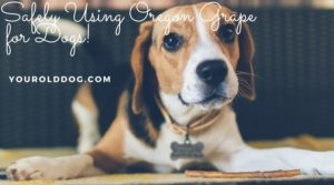 how to use oregon grape for dogs