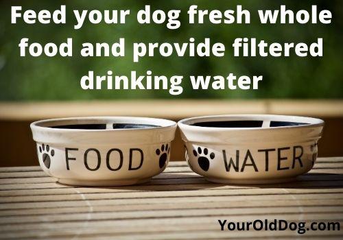 feed your dog fresh whole food