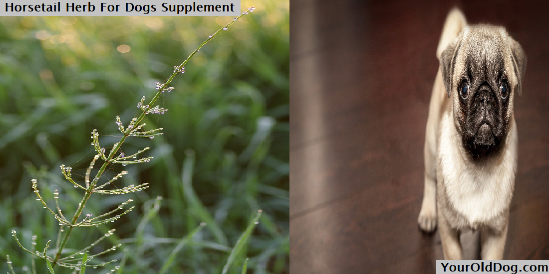 Horsetail Herb For Dogs Supplement