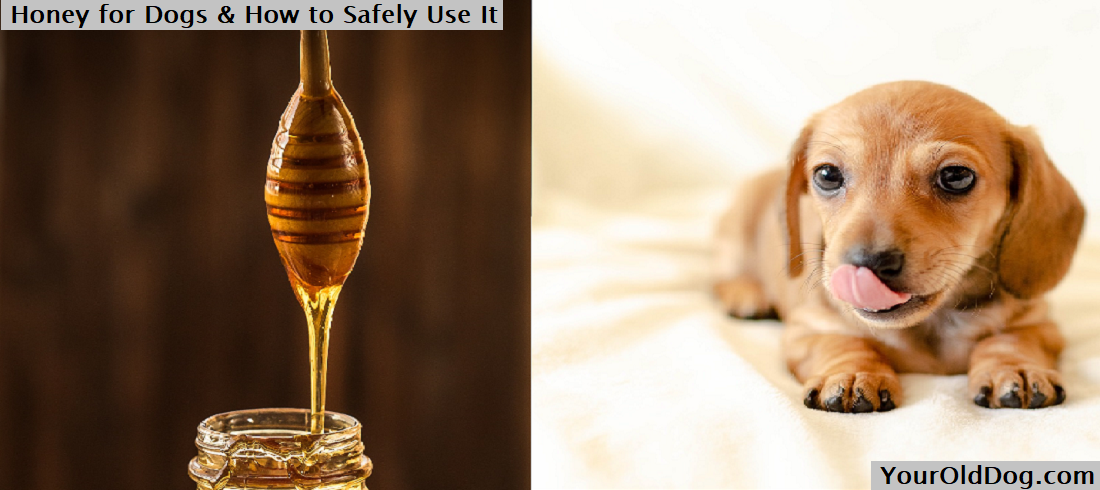 Honey for Dogs & How to Safely Use It