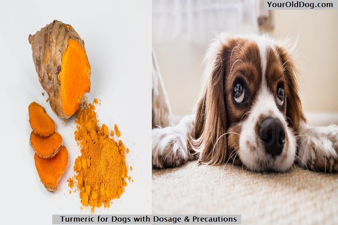 Turmeric for Dogs with Dosage & Precautions