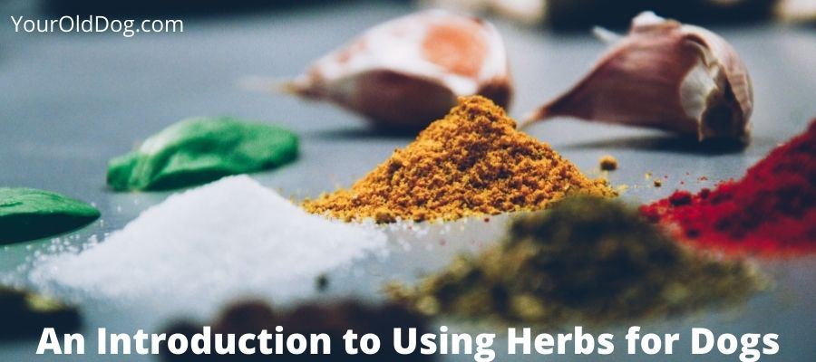 how to safely use herbs for dogs