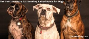 are raised bowls safe for dogs
