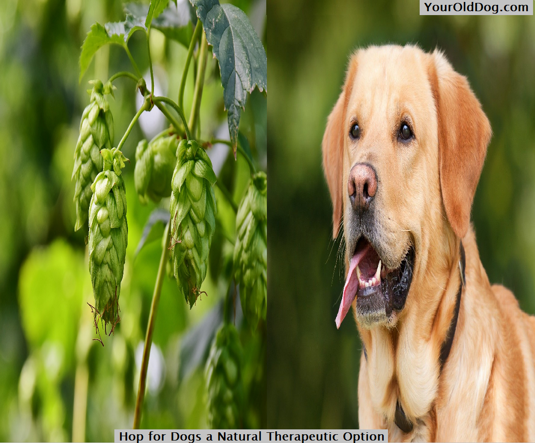 Hop for Dogs a Natural Therapeutic Optio