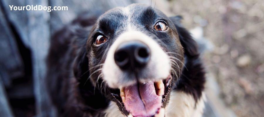 Hops dosage for dogs