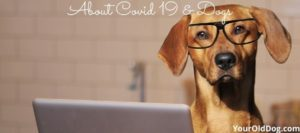 covid 19 in dogs