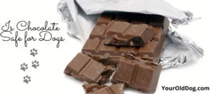 is chocolate safe for dogs