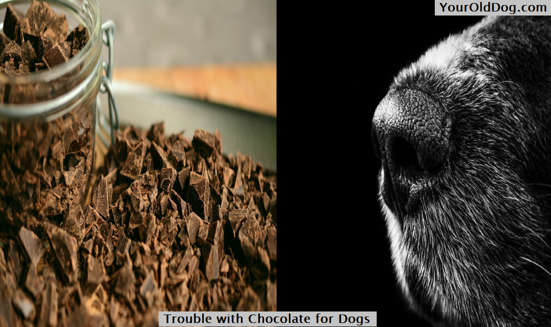 Trouble with Chocolate for Dogs