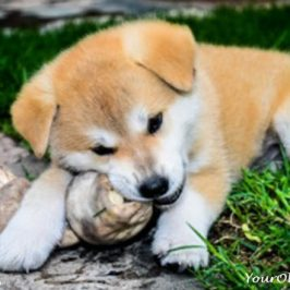 3 Best Alternatives To Rawhide Dog Chews